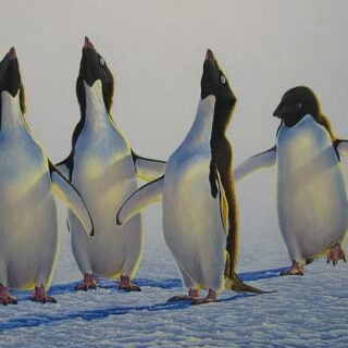 morpeth art gallery, hunter valley, newcastle, nsw, investment art, fine art, original, artwork, collector, investment, artist, portrait, oil, stretched canvas, adelie penguin, canvas board, wildlife, landscape, acrylic, artists,
