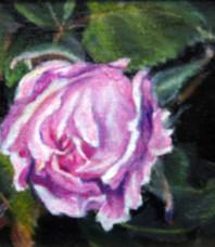 Rosebud Unfolding, Lilac Pink