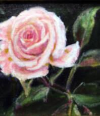 Rosebud Unfolding, Salmon Pink