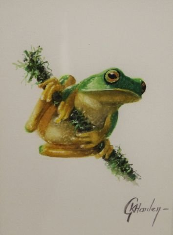 morpeth art gallery, graceful dainty tree frog, hunter valley, newcastle, nsw, investment, fine, original, artwork, collector, artist, artists, investment, wildlife, australias only living master, gordon hanley, art renewal centre, watercolour, macaw, toucan, gang gang, rosella, parakeet, coffins cockatoo, green winged macaw, lorikeet, finch, swift parrot, malabar parakeet, alexandrine parakeet, scarlet macaw, chattering lory, scarlet chested parrot, superb blue wren, red tailed racket parrot, cockatiel, masked lovebird, yellow throated hanging parrot, yellow bibbed lorikeet, white fronted amazon, pesquet's parrot, graceful dainty tree frog,kookaburra, wedgetail eagle, prints, published