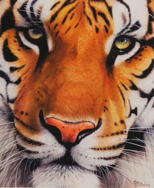 morpeth art gallery, hunter valley, newcastle, nsw, investment art, fine art, original, artwork, collector, bengal eyes, bengal tiger, gary fleming, investment, artist, giclee, reproduction, print