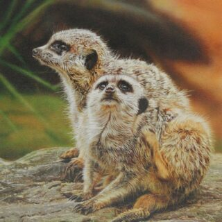 morpeth art gallery, hunter valley, newcastle, nsw, investment art, fine art, original, artwork, collector, 5 o'clock itch, meerkats, stephen jesic, investment, artist, giclee, reproduction, print