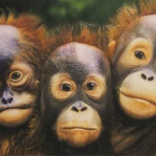 morpeth art gallery, hunter valley, newcastle, nsw, investment art, fine art, original, artwork, a hopeful generation, garry fleming, orangutans, collector, investment, artist, giclee, reproduction, print