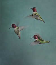 Anna's Hummingbirds Giclee on Canvas by Brett Jarrett