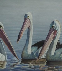 Australian Pelicans Giclee on Canvas by Brett Jarrett