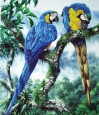 Blue And Yellow Macaw Limited Edition Print by Gordon Hanley
