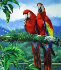 Scarlet Macaw Limited Edition print by Gordon Hanley