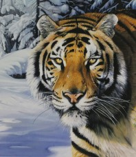 Snow Tiger Limited Edition Giclee on paper by Garry Fleming