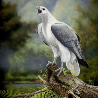 morpeth art gallery, hunter valley, newcastle, nsw, investment art, fine art, original, artwork, collector, a wild voice, white bellied sea eagle, investment, artist, giclee, reproduction, print