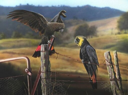 morpeth art gallery, hunter valley, newcastle, nsw, investment art, fine art, original, artwork, collector, cockatoo cohorts, glossy black cockatoos, investment, artist, giclee, reproduction, print