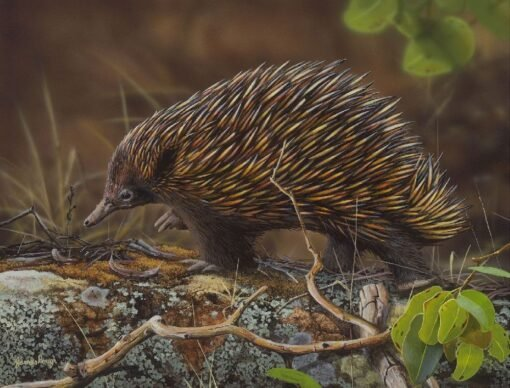 morpeth art gallery, hunter valley, newcastle, nsw, investment art, fine art, original, artwork, collector, echidna waddle, short beaked echidna, investment, artist, giclee, reproduction, print
