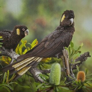 morpeth art gallery, hunter valley, newcastle, nsw, investment art, fine art, original, artwork, collector, enchanting yellow tails, yellow tailed black cockatoos, investment, artist, giclee, reproduction, print