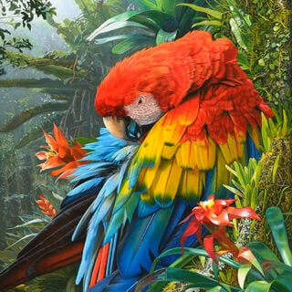 morpeth art gallery, hunter valley, newcastle, nsw, investment art, fine art, original, artwork, collector, jewel of the amazon, stephen jesic, scartlet macaw, investment, artist, giclee, reproduction, print
