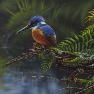 morpeth art gallery, hunter valley, newcastle, nsw, investment art, fine art, original, artwork, collector, mamning river azure, azure, kingfisher, investment, artist, giclee, reproduction, print