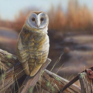 morpeth art gallery, hunter valley, newcastle, nsw, investment art, fine art, original, artwork, collector, morning chill, barn owl, investment, artist, giclee, reproduction, print