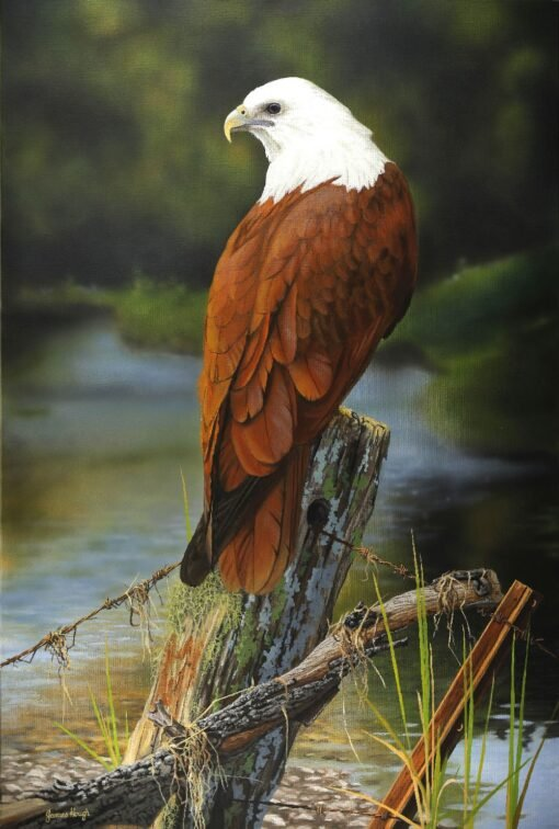 morpeth art gallery, hunter valley, newcastle, nsw, investment art, fine art, original, artwork, collector, river nomad, brahminy kite, investment, artist, giclee, reproduction, print