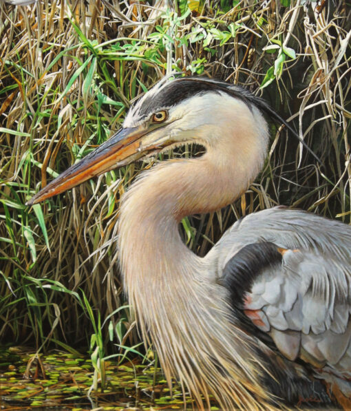 morpeth art gallery, hunter valley, newcastle, nsw, investment art, fine art, original, artwork, collector, susui express, great blue heron, stephen jesic, investment, artist, giclee, reproduction, print