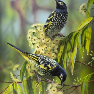 morpeth art gallery, hunter valley, newcastle, nsw, investment art, fine art, original, artwork, collector, the renmants, regent honeyeaters, endangered, investment, artist, giclee, reproduction, print