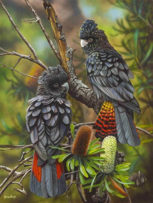 morpeth art gallery, hunter valley, newcastle, nsw, investment art, fine art, original, artwork, travel companions, red tailed black cockatoos, collector, investment, artist, giclee, reproduction, print
